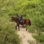 Passeggiate a cavallo in pineta