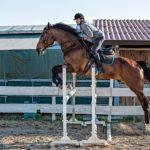 foto lezioni di salto ostacoli in maremma
