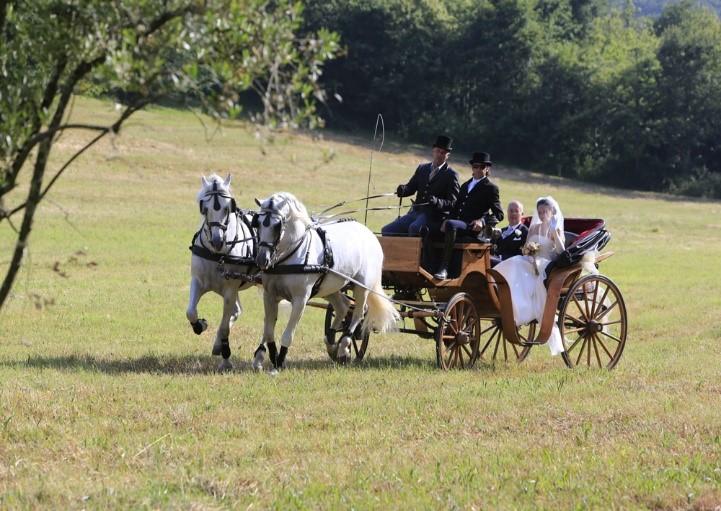 immagine carrozza per matrimoni, sposi. cavallonatura, grosseto, toscana