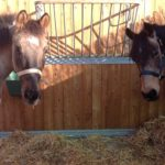 foto pensione per cavalli a grosseto