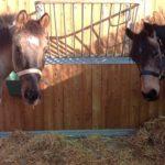 foto pensione cavalli maremma