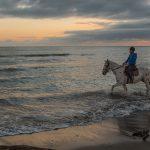 immagini escursioni sulla spiaggia a cavallo. cavallonatura, grosseto, toscana, maremma