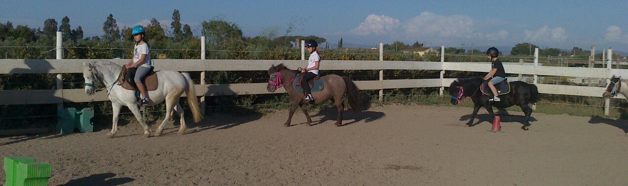 Fotografia pony di Cavallo Natura in Toscana