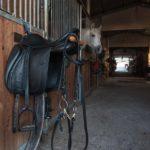 foto pensione per cavalli in toscana