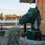 immagine centro equitazione in maremma