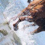 foto schizzi di acqua cavallo sul mare toscana