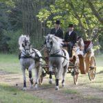 foto cavalli con carrozza da matrimonio
