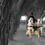 foto carrozza cavalli grosseto