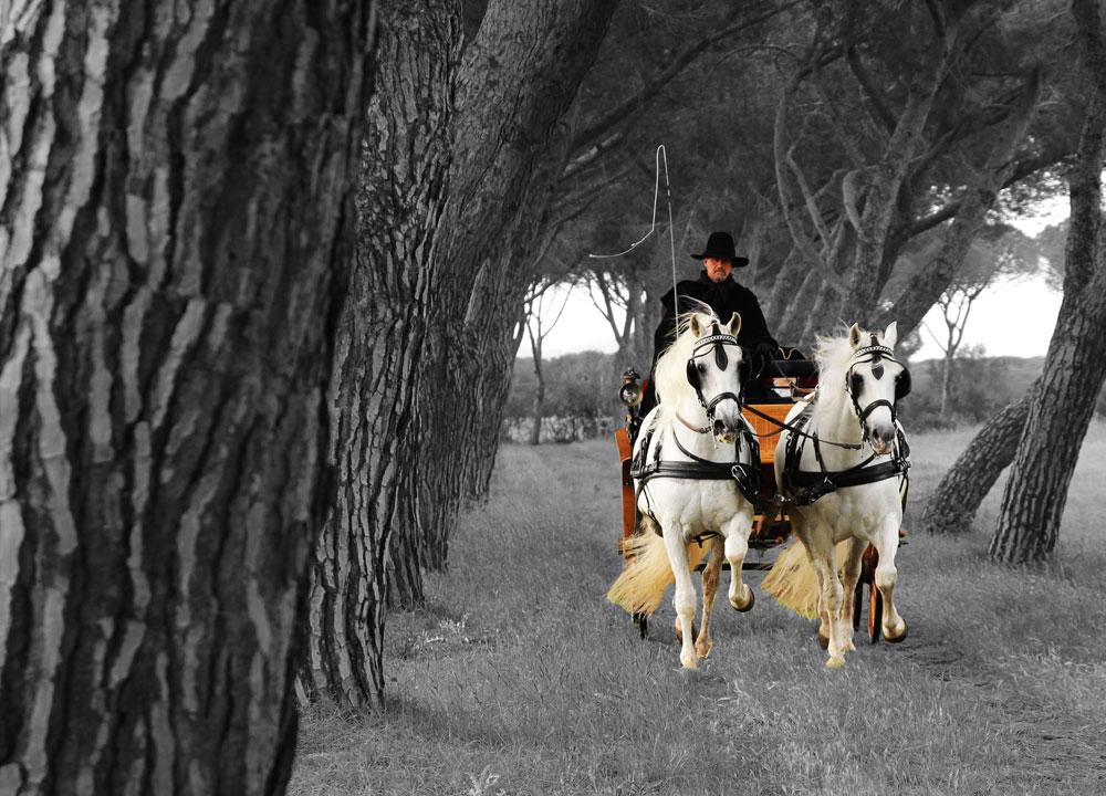 immagini carrozza cavalli grosseto