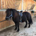 foto pony centro equestre cavallonatura, grosseto, toscana