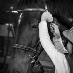 Campi Estivi cavallo 04